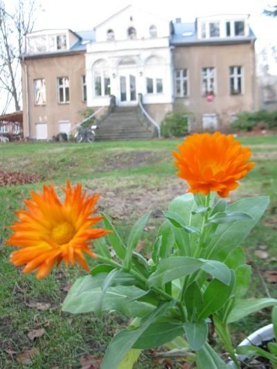 Projekthaus Babelsberg Fragebogen Gartenkarte